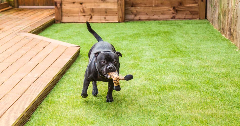 artificial grass for pets